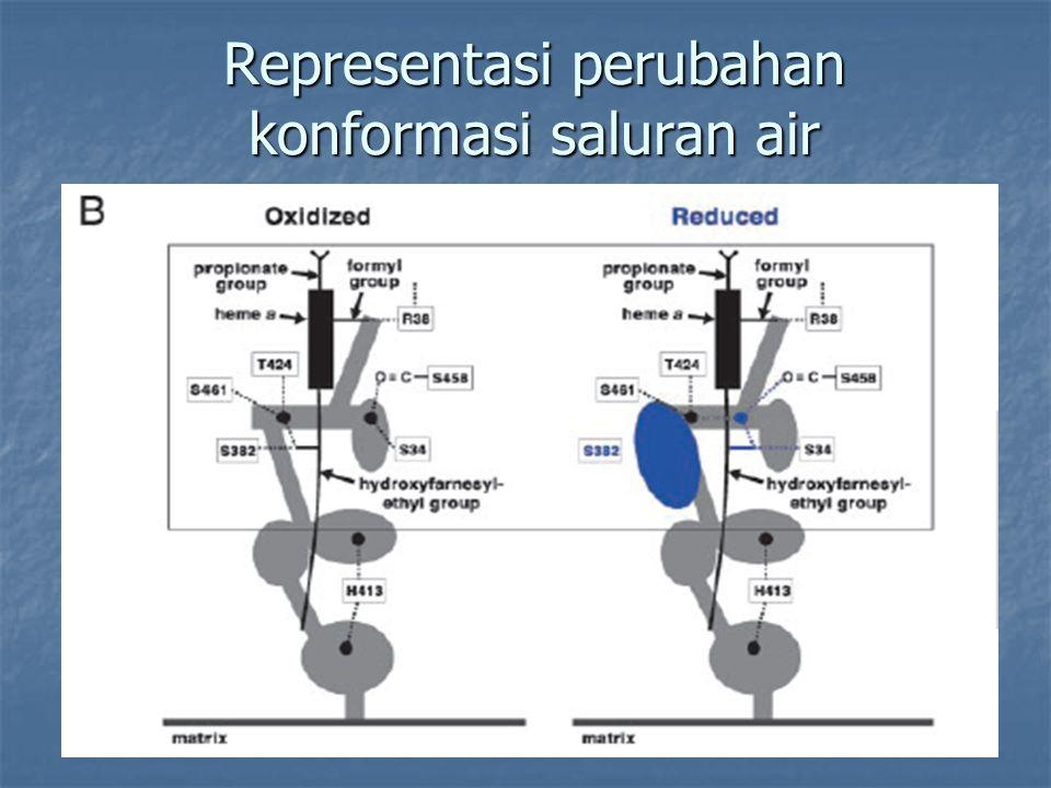 Representasi perubahan konformasi saluran air