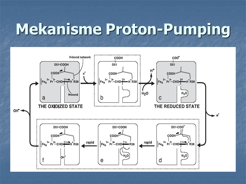 Mekanisme Proton-Pumping