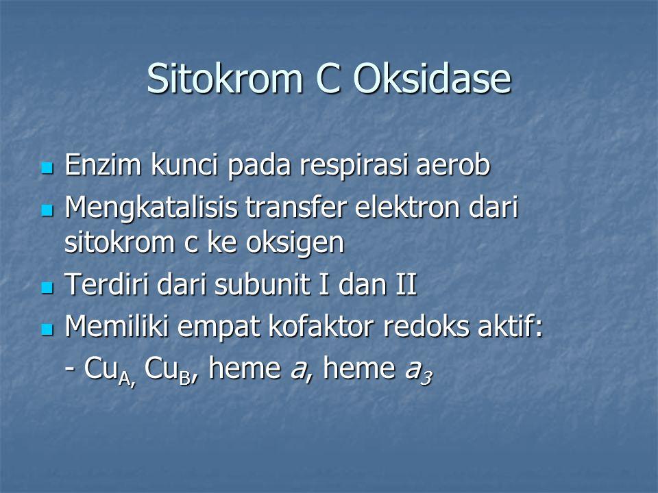 Sitokrom C Oksidase Enzim kunci pada respirasi aerob