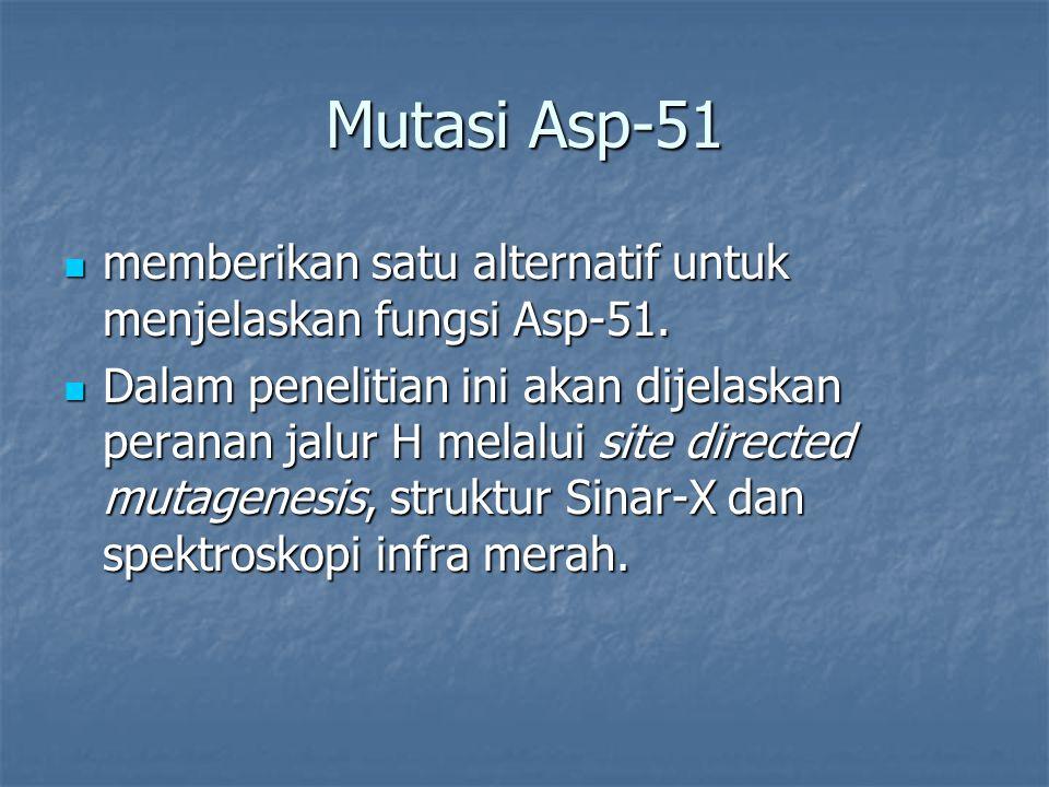 Mutasi Asp-51 memberikan satu alternatif untuk menjelaskan fungsi Asp-51.
