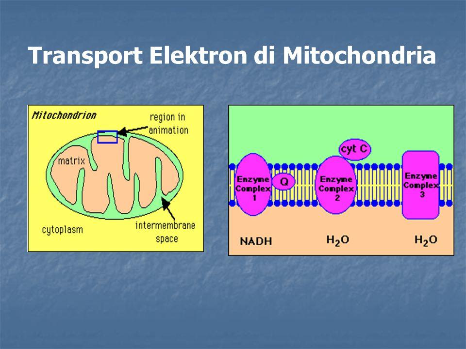 Transport Elektron di Mitochondria