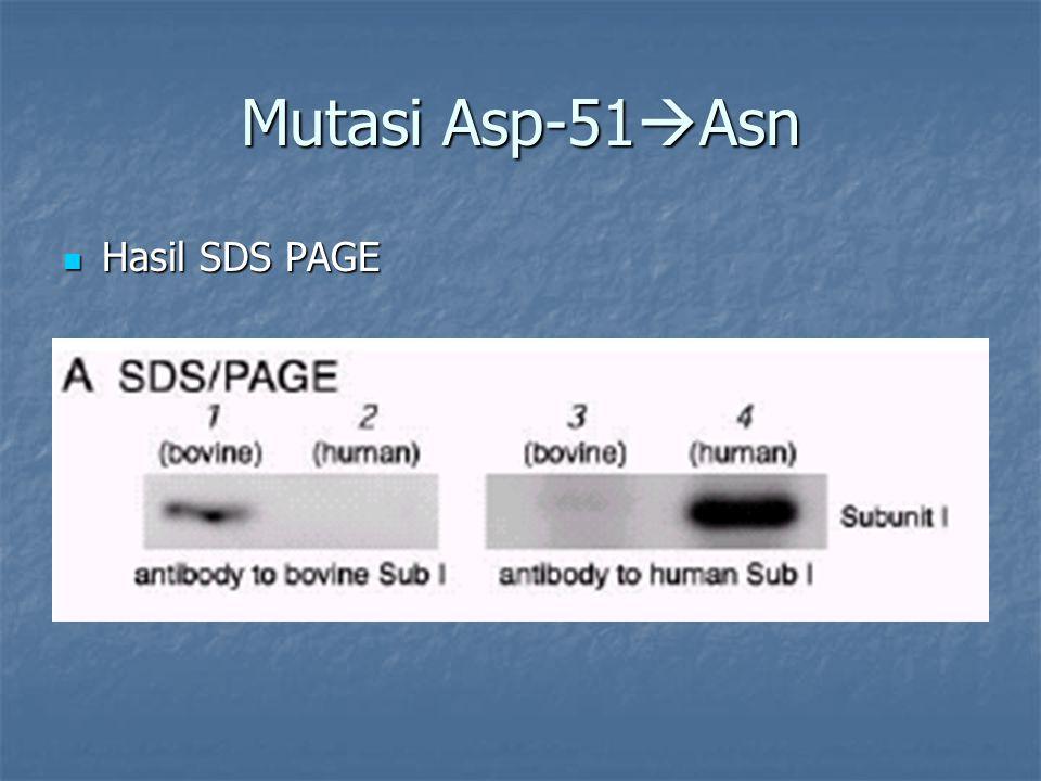 Mutasi Asp-51Asn Hasil SDS PAGE