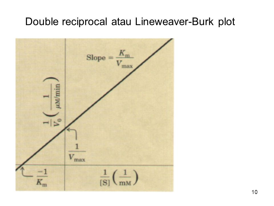 Double reciprocal atau Lineweaver-Burk plot