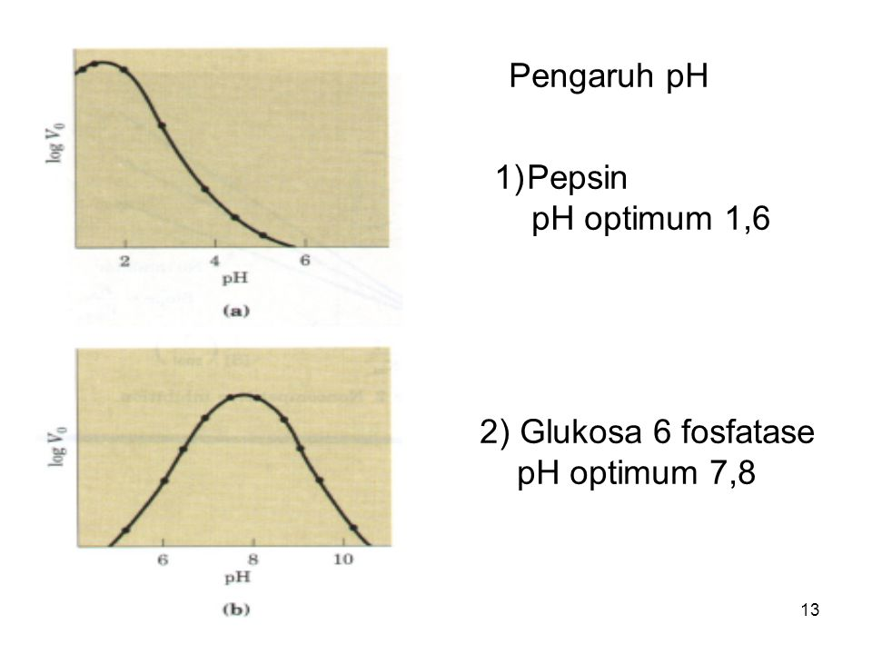 Pengaruh pH Pepsin pH optimum 1,6 2) Glukosa 6 fosfatase pH optimum 7,8