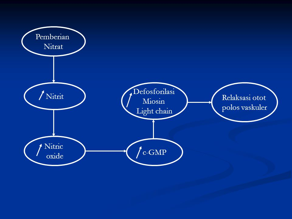Pemberian Nitrat. Nitrit. Defosforilasi. Miosin. Light chain. Relaksasi otot. polos vaskuler.