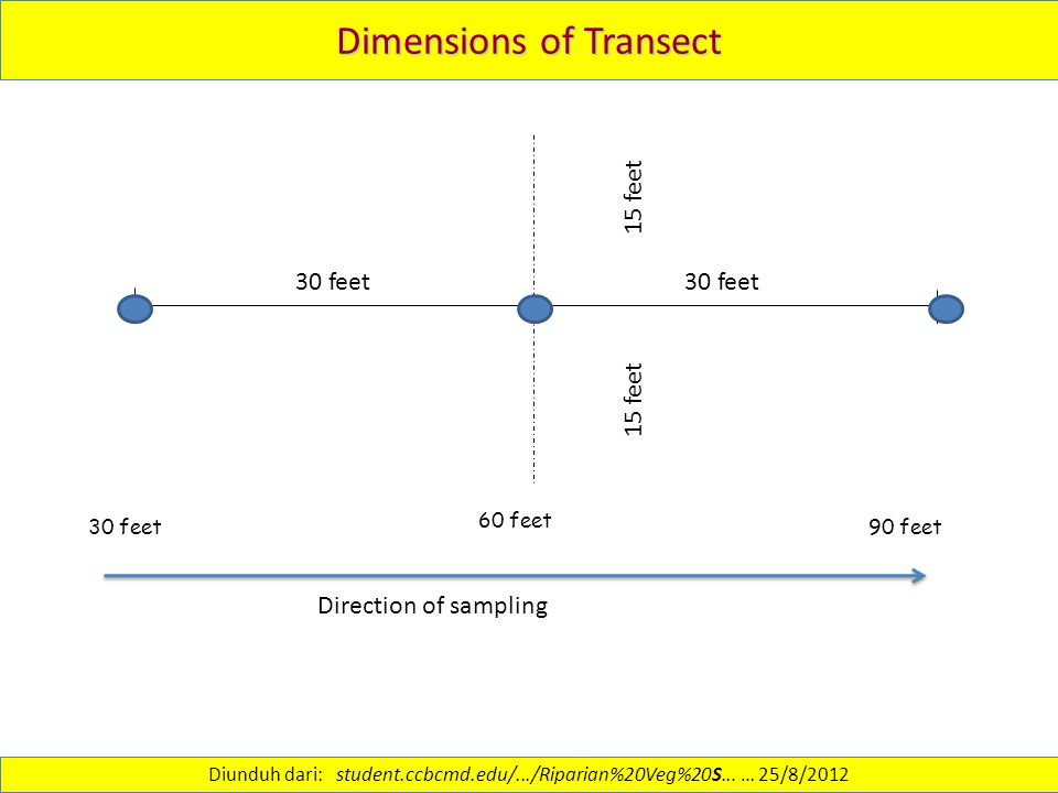 Dimensions of Transect