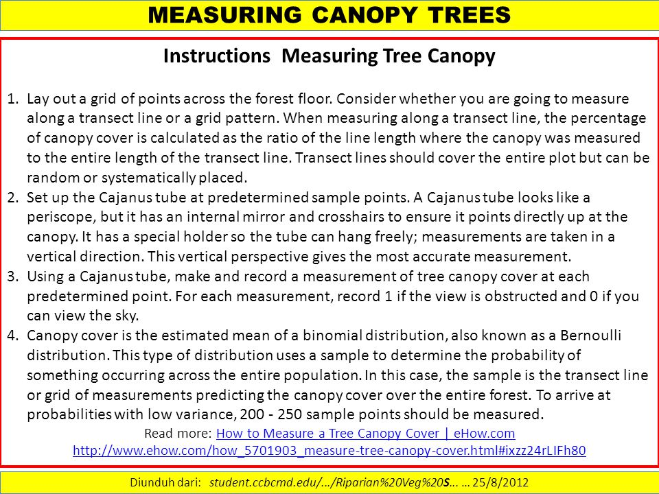 MEASURING CANOPY TREES