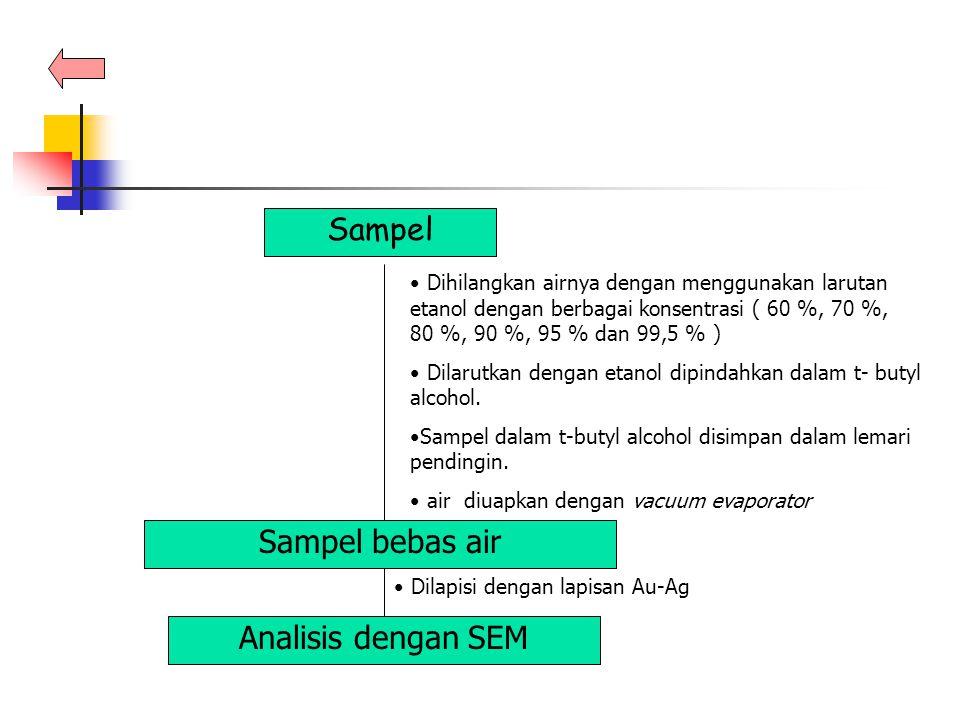 Sampel Sampel bebas air Analisis dengan SEM