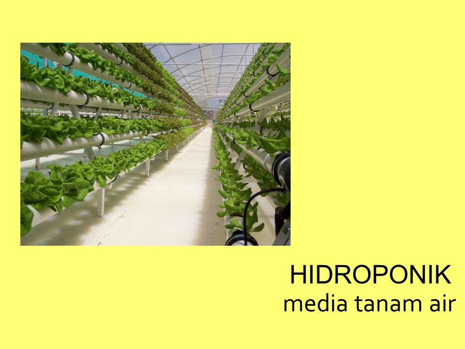 HIDROPONIK media tanam air