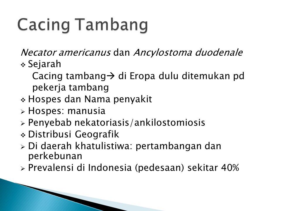Cacing Tambang Necator americanus dan Ancylostoma duodenale Sejarah
