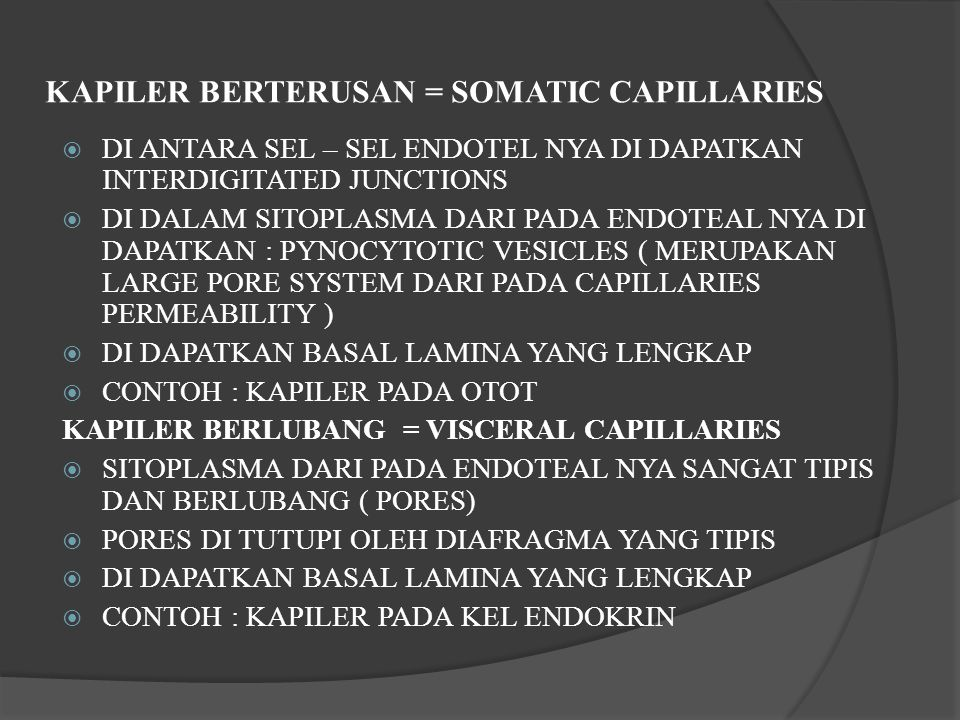 KAPILER BERTERUSAN = SOMATIC CAPILLARIES