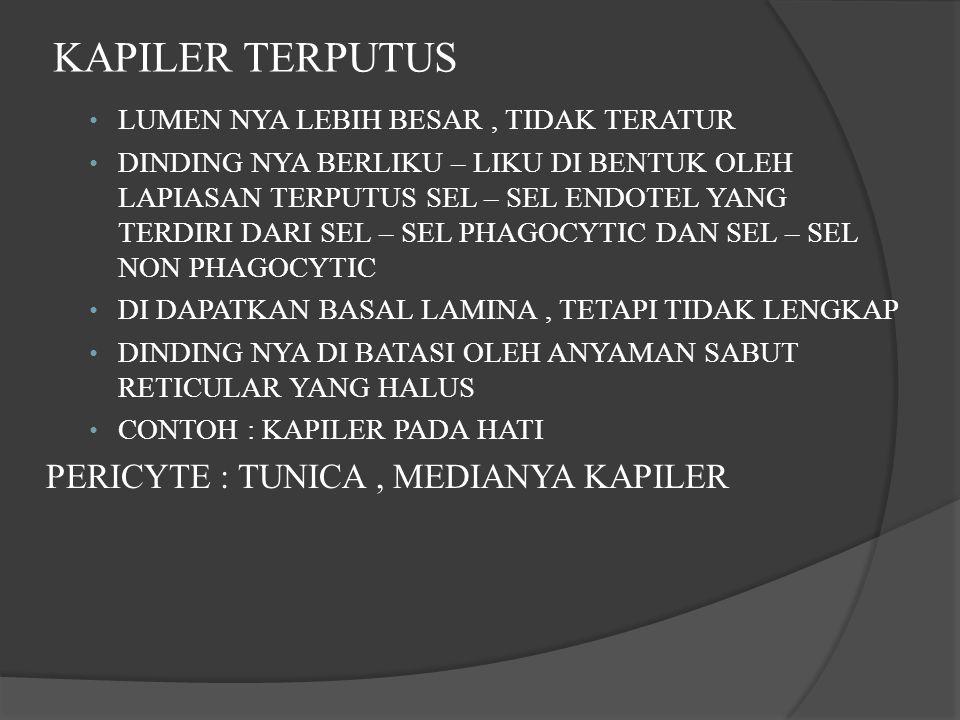 KAPILER TERPUTUS PERICYTE : TUNICA , MEDIANYA KAPILER