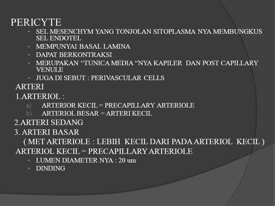 PERICYTE ARTERI 1.ARTERIOL : 2.ARTERI SEDANG 3. ARTERI BASAR