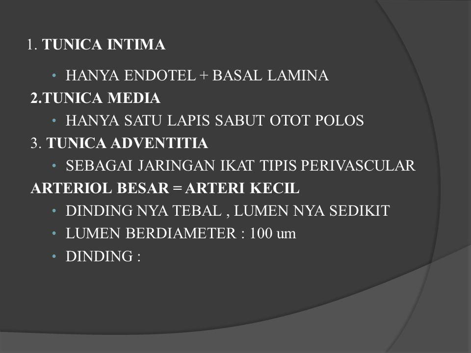 1. TUNICA INTIMA HANYA ENDOTEL + BASAL LAMINA. 2.TUNICA MEDIA. HANYA SATU LAPIS SABUT OTOT POLOS.
