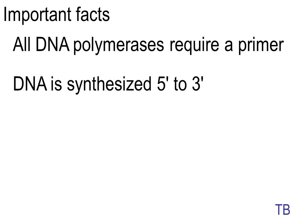 All DNA polymerases require a primer