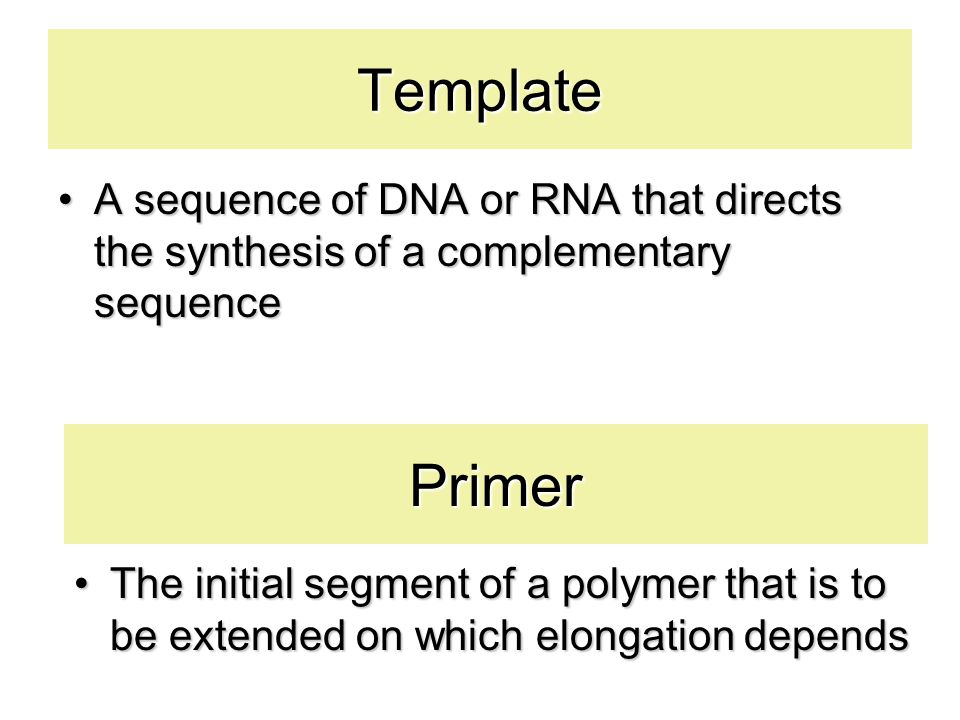 Template A sequence of DNA or RNA that directs the synthesis of a complementary sequence. Primer.