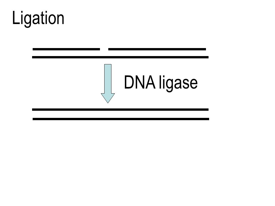 Ligation DNA ligase