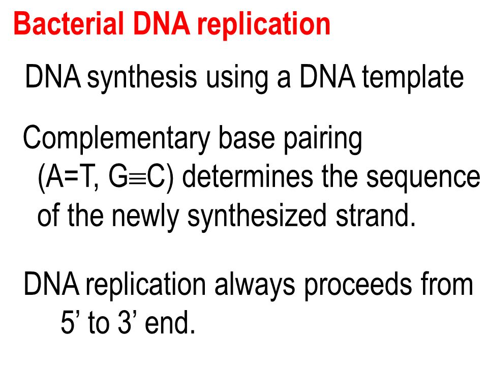 Bacterial DNA replication