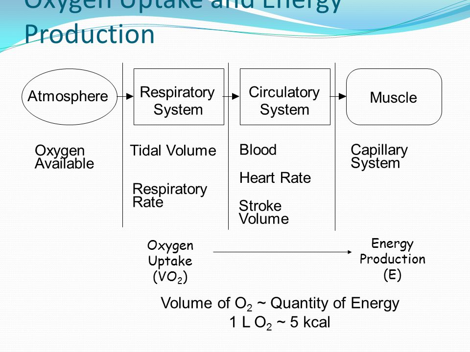 Oxygen Uptake and Energy Production