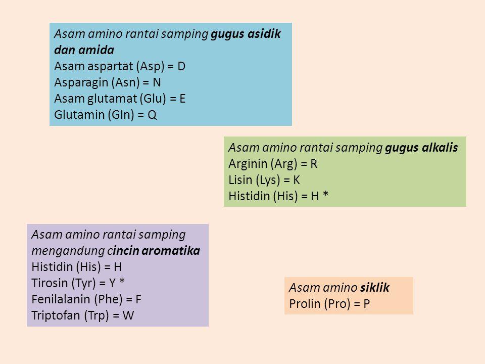 Asam amino rantai samping gugus asidik dan amida