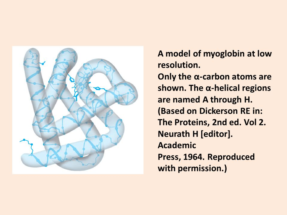 A model of myoglobin at low resolution.