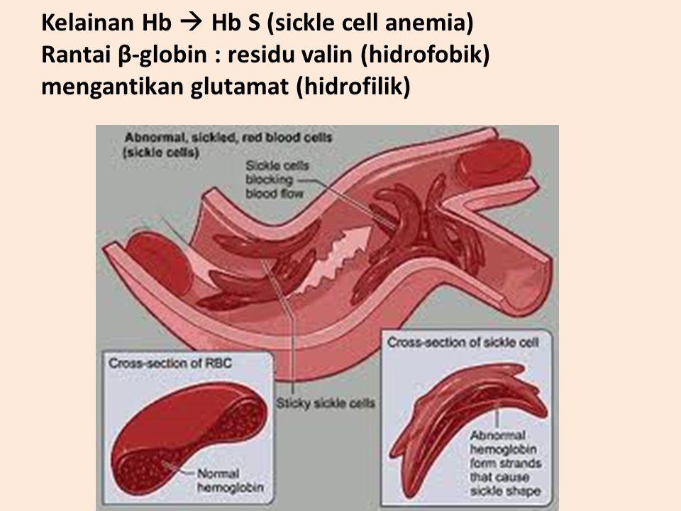 Kelainan Hb  Hb S (sickle cell anemia) Rantai β-globin : residu valin (hidrofobik) mengantikan glutamat (hidrofilik)