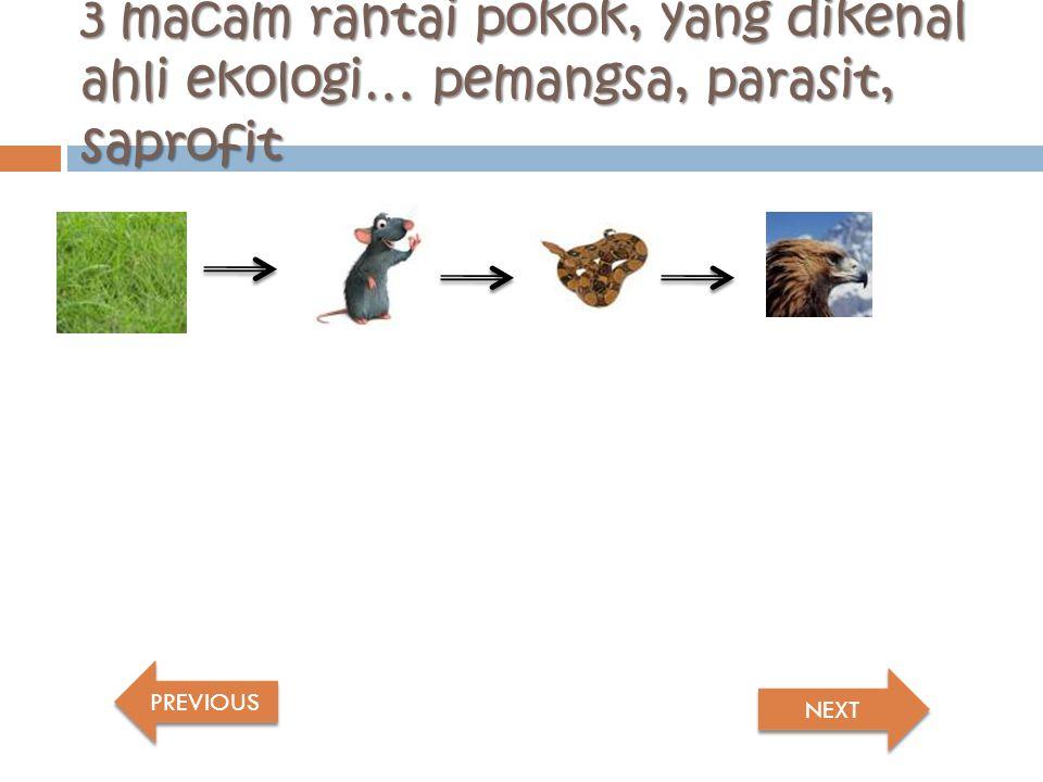 3 macam rantai pokok, yang dikenal ahli ekologi… pemangsa, parasit, saprofit