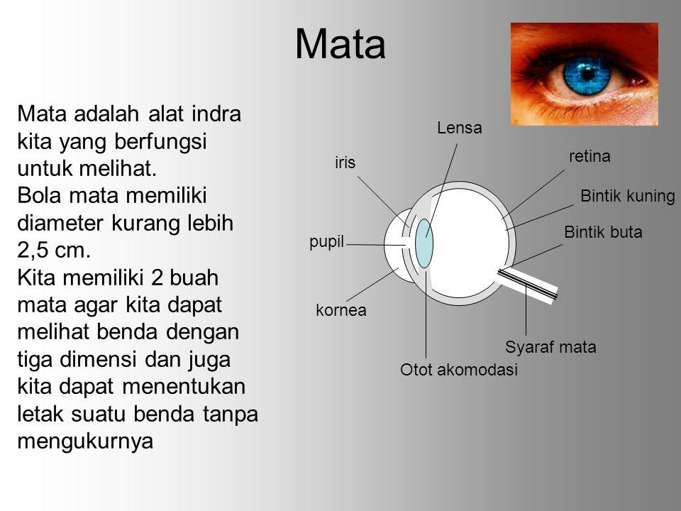 Mata Mata adalah alat indra kita yang berfungsi untuk melihat.