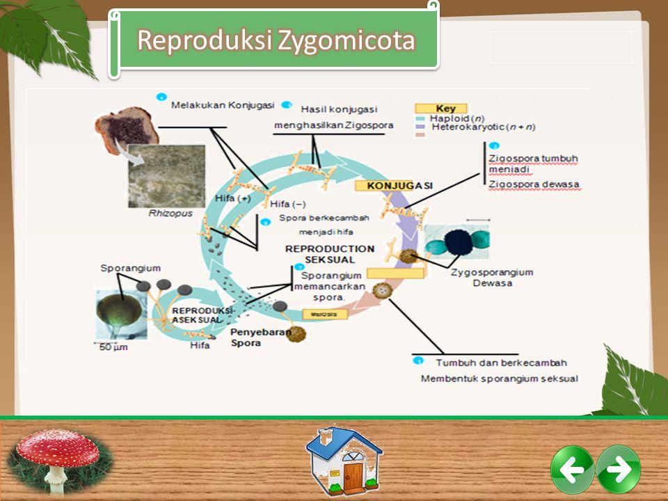 Reproduksi Zygomicota