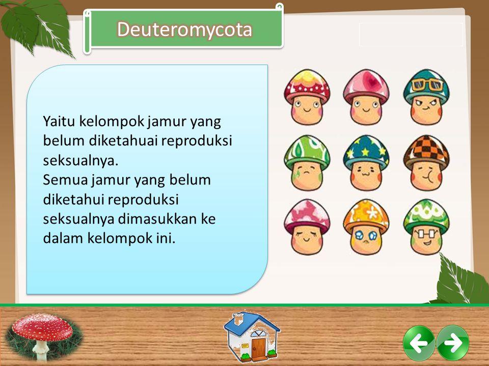 Deuteromycota Yaitu kelompok jamur yang belum diketahuai reproduksi seksualnya.