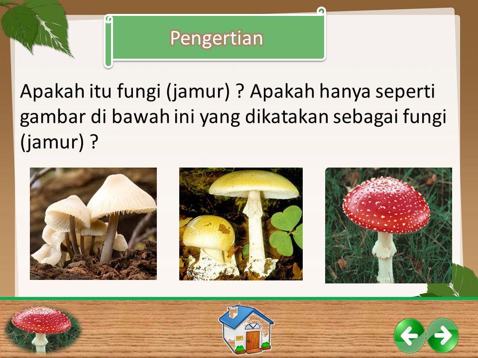 Pengertian Apakah itu fungi (jamur) .