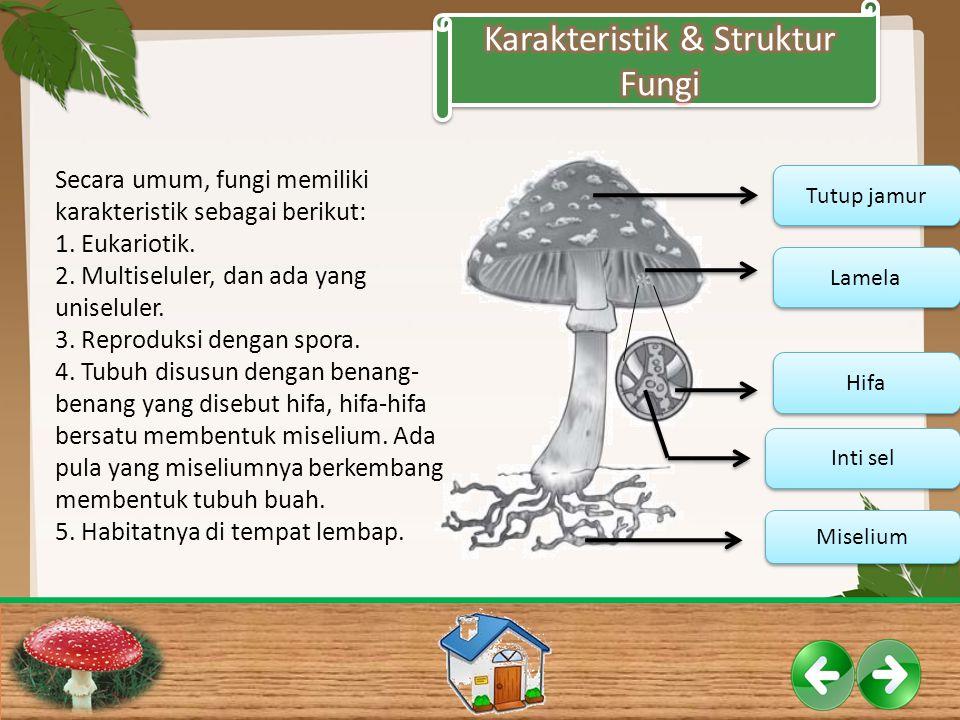 Karakteristik & Struktur Fungi