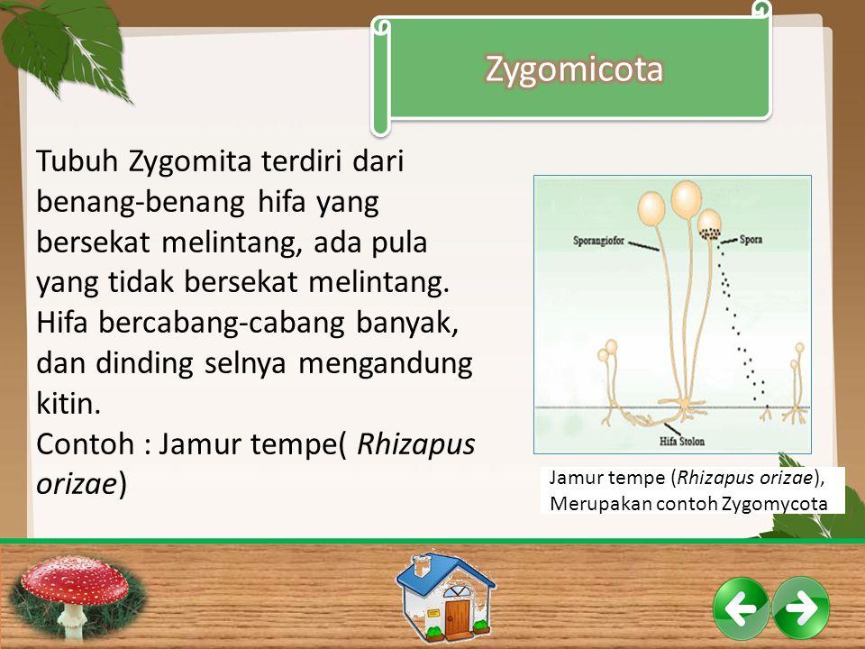 Zygomicota