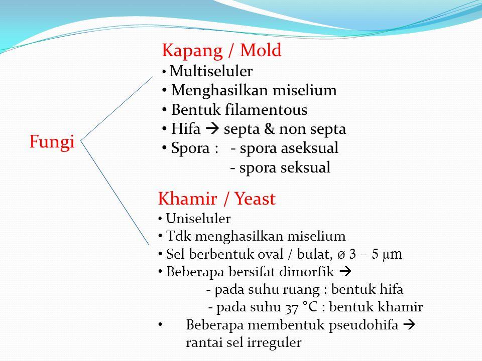 Kapang / Mold Fungi Khamir / Yeast Menghasilkan miselium
