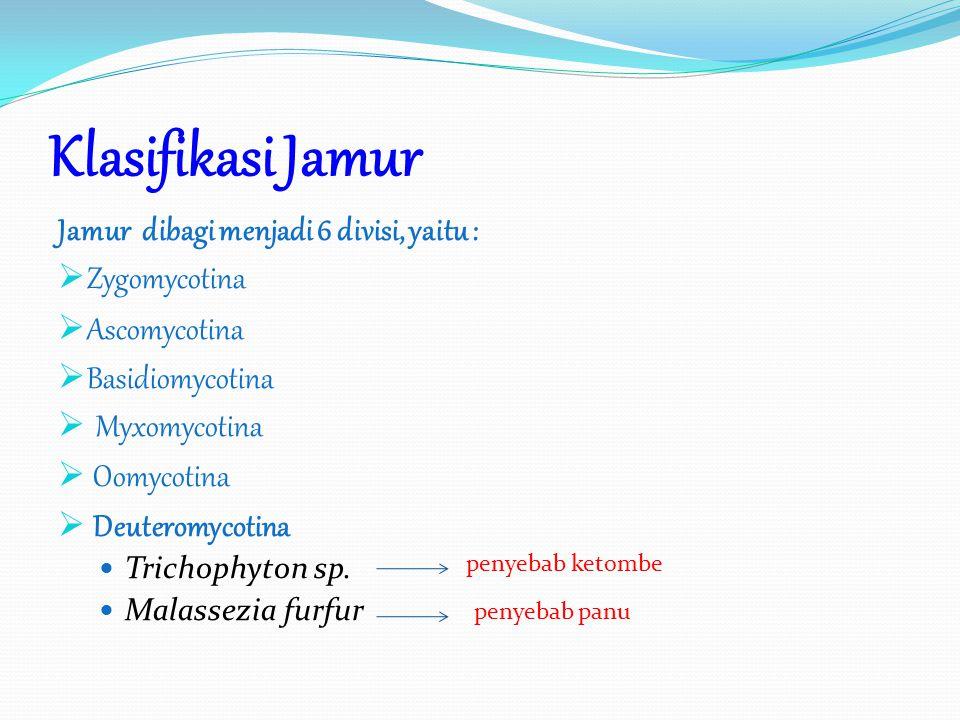 Klasifikasi Jamur Jamur dibagi menjadi 6 divisi, yaitu : Zygomycotina