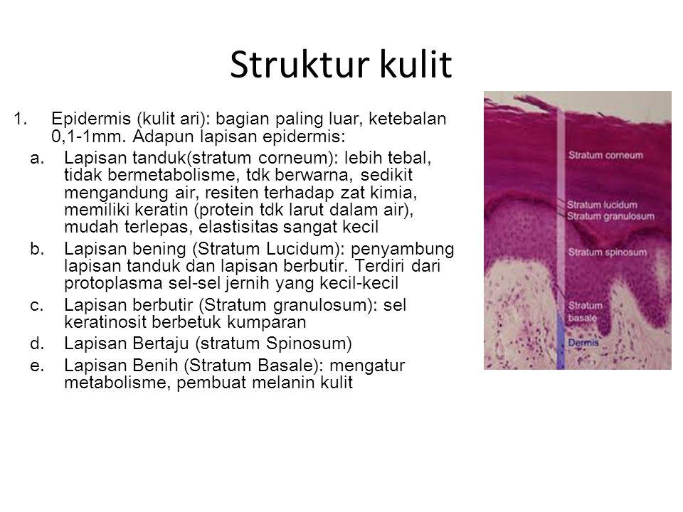 Struktur kulit Epidermis (kulit ari): bagian paling luar, ketebalan 0,1-1mm. Adapun lapisan epidermis: