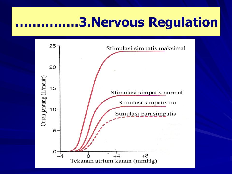 …………...3.Nervous Regulation