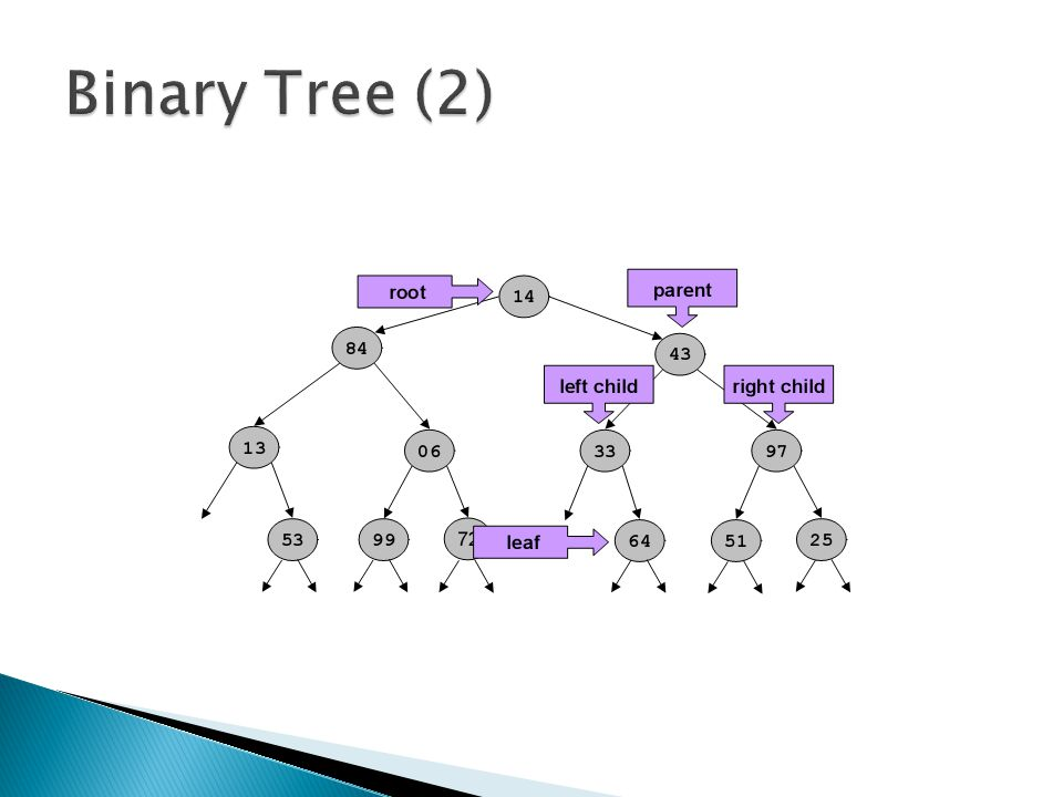 Binary Tree (2)