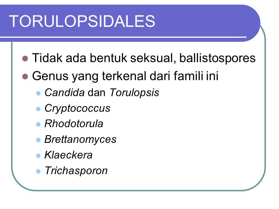 TORULOPSIDALES Tidak ada bentuk seksual, ballistospores
