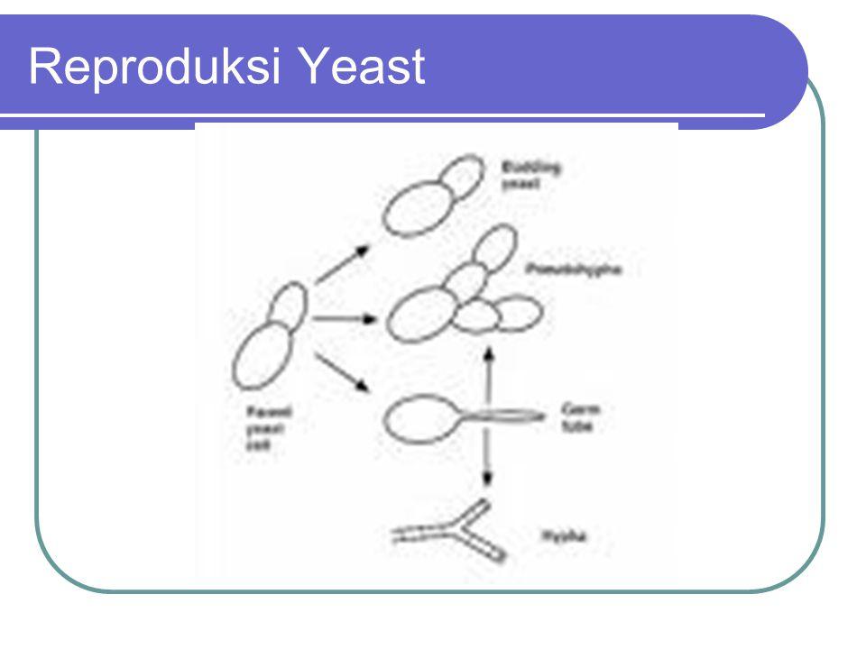 Reproduksi Yeast