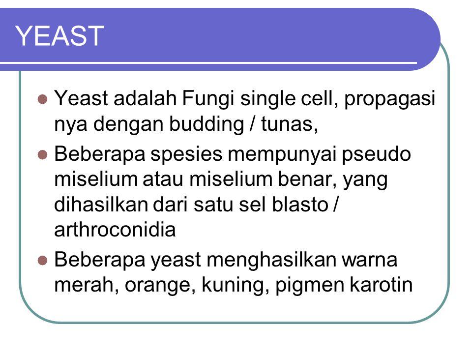 YEAST Yeast adalah Fungi single cell, propagasi nya dengan budding / tunas,