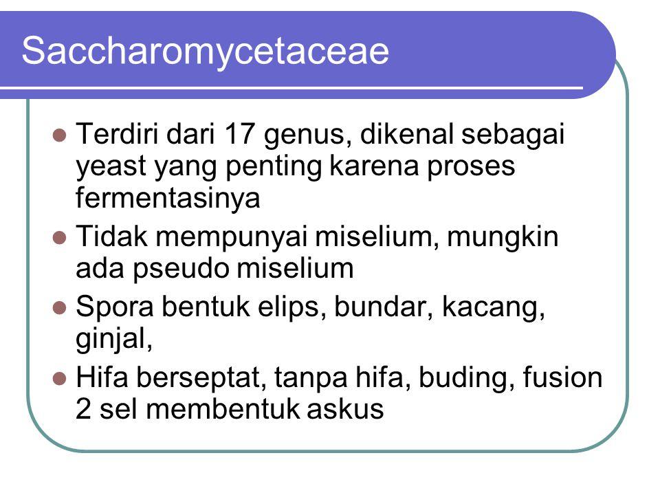 Saccharomycetaceae Terdiri dari 17 genus, dikenal sebagai yeast yang penting karena proses fermentasinya.