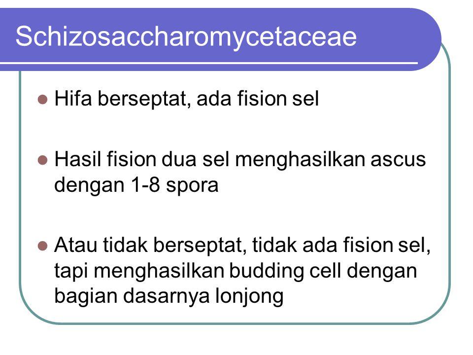 Schizosaccharomycetaceae