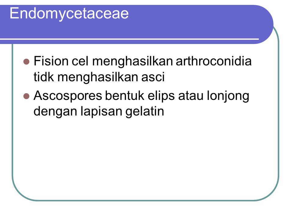 Endomycetaceae Fision cel menghasilkan arthroconidia tidk menghasilkan asci.