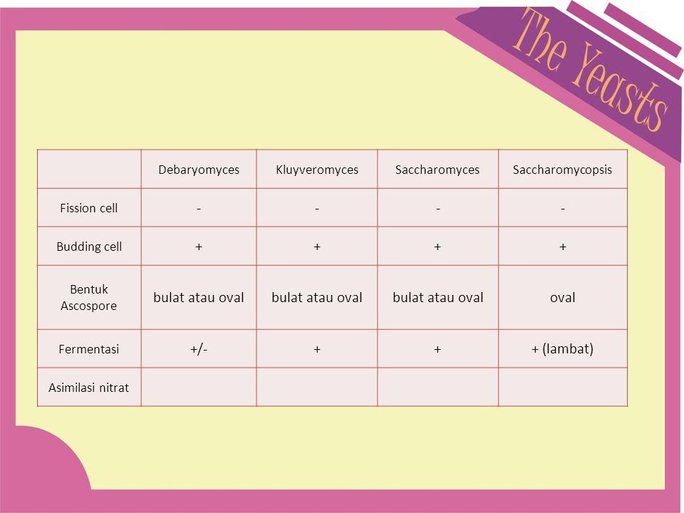 - + bulat atau oval oval +/- + (lambat) Debaryomyces Kluyveromyces