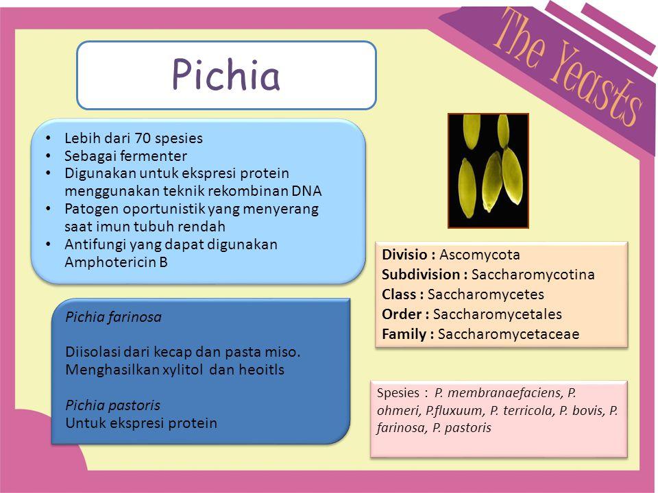 Pichia Lebih dari 70 spesies Sebagai fermenter