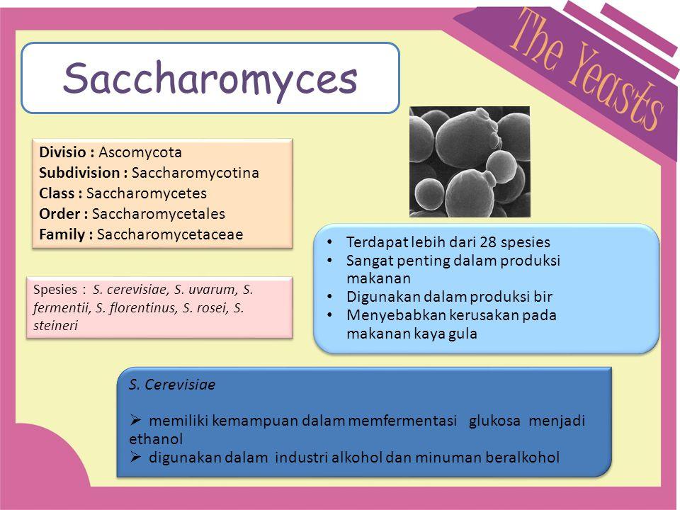 Saccharomyces Divisio : Ascomycota Subdivision : Saccharomycotina