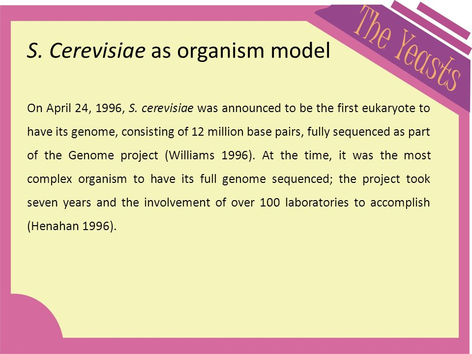 S. Cerevisiae as organism model