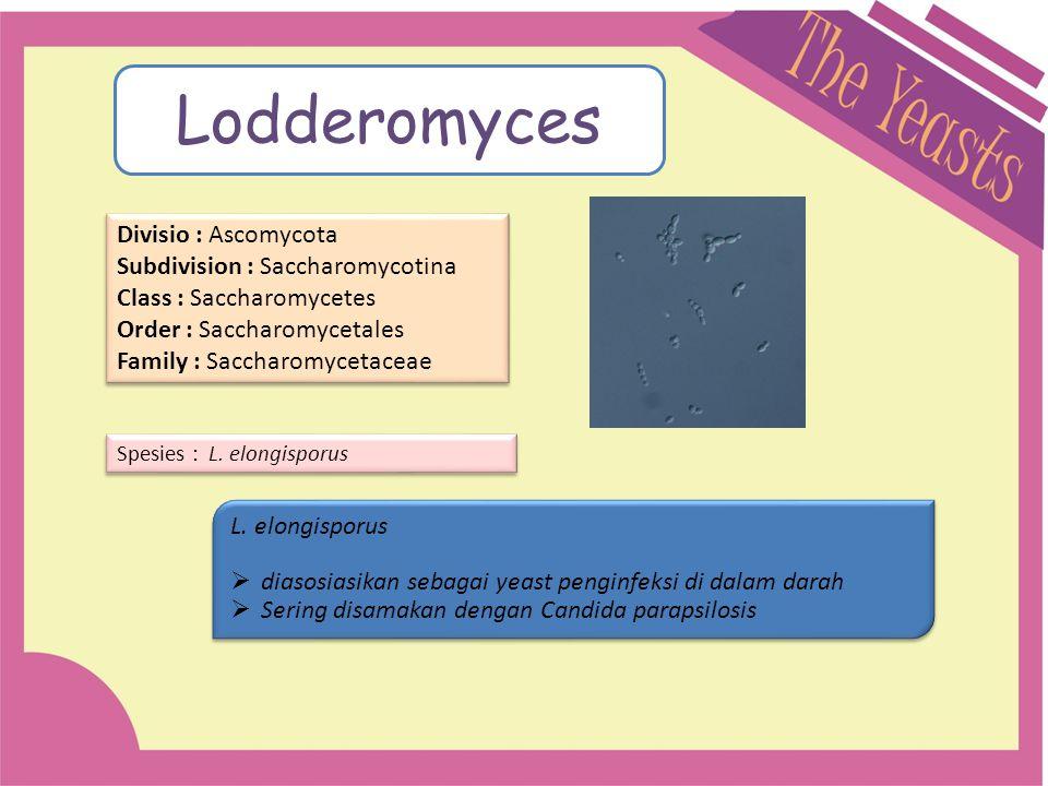Lodderomyces Divisio : Ascomycota Subdivision : Saccharomycotina