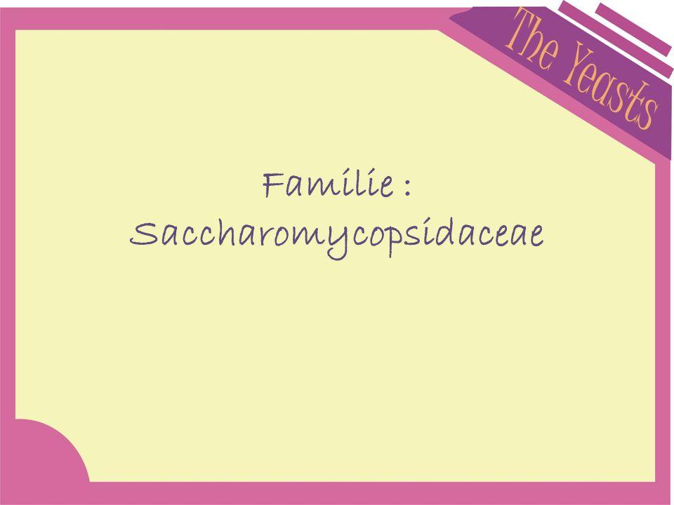Familie : Saccharomycopsidaceae